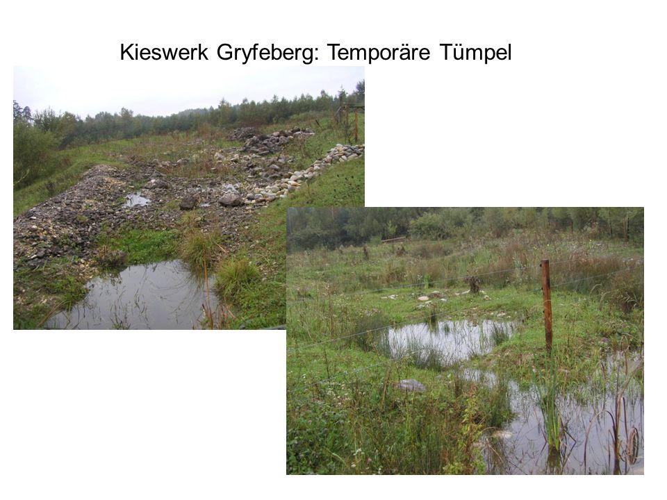 Kieswerk Gryfeberg: Temporäre Tümpel