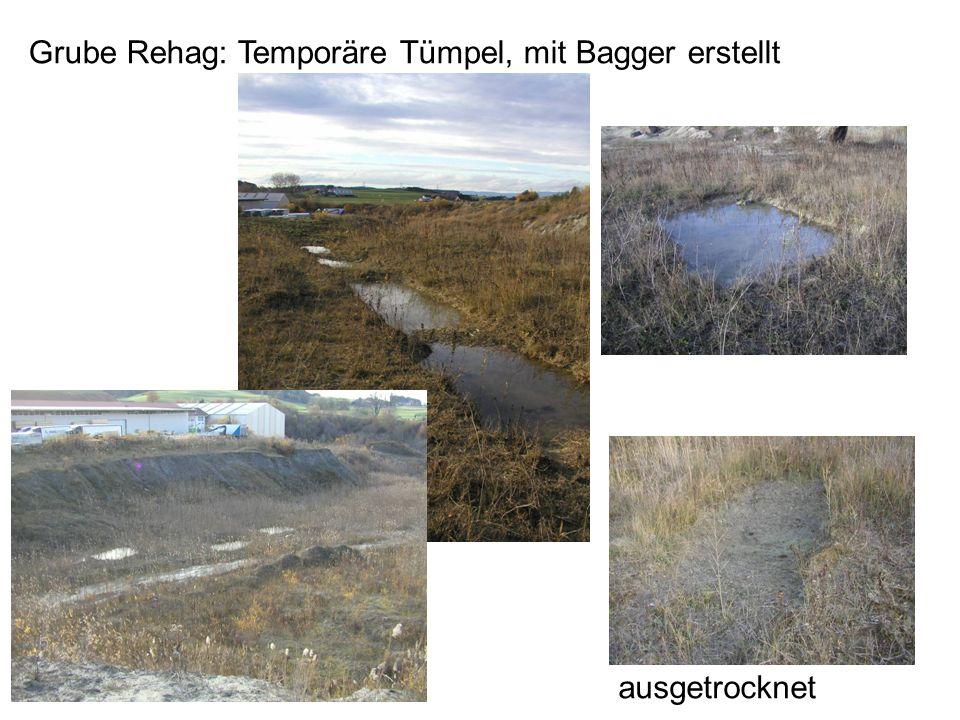 Grube Rehag: Temporäre Tümpel, mit Bagger erstellt