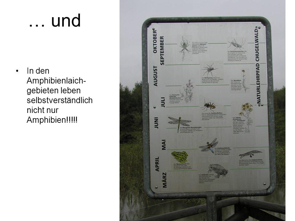 … und In den Amphibienlaich-gebieten leben selbstverständlich nicht nur Amphibien!!!!!