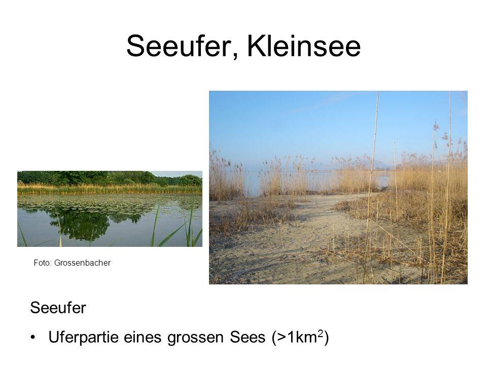 Seeufer, Kleinsee Seeufer Uferpartie eines grossen Sees (>1km2)