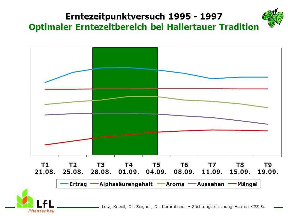 Erntezeitpunktversuch 1995 - 1997 Optimaler Erntezeitbereich bei Hallertauer Tradition