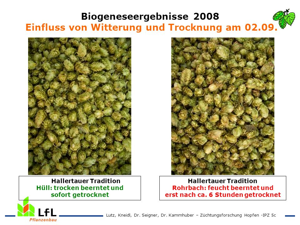 Biogeneseergebnisse 2008 Einfluss von Witterung und Trocknung am 02.09.