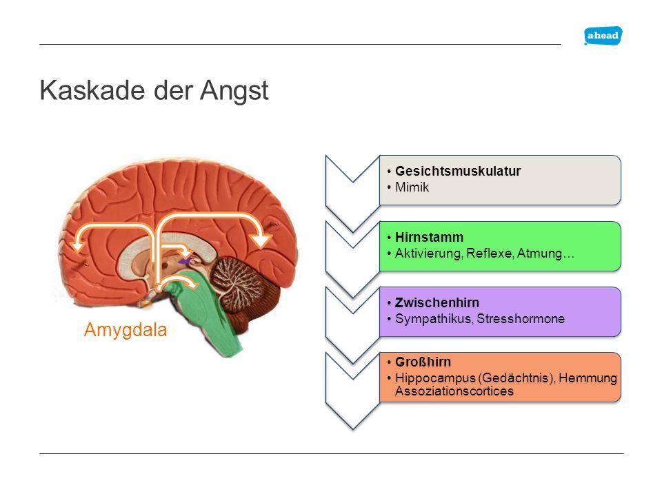 Kaskade der Angst Amydala Amygdala Gesichtsmuskulatur: Mimik