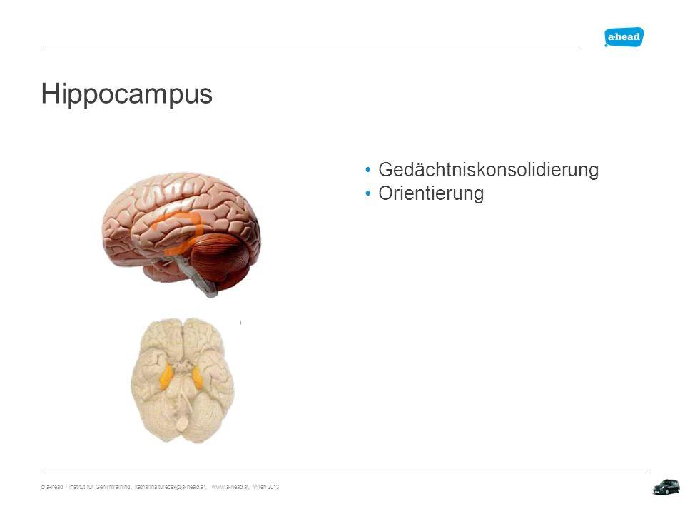 Hippocampus Hippocampus Gedächtniskonsolidierung Orientierung
