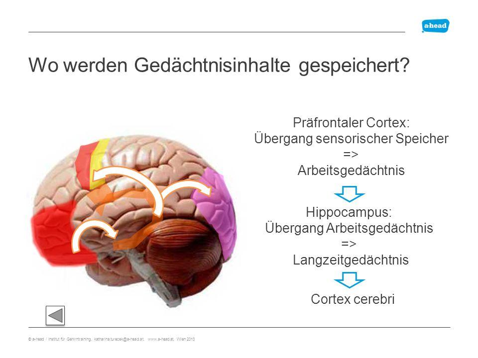 Anatomie explizites Gedächtnis