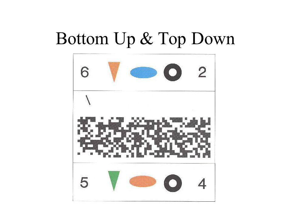 Bottom Up & Top Down