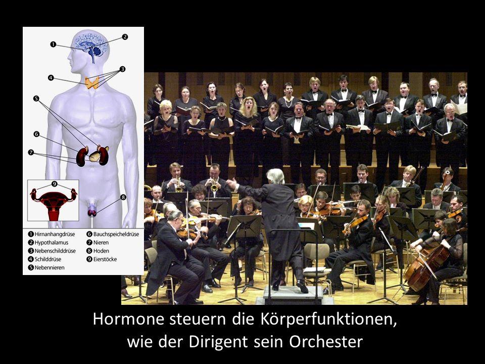 Hormone steuern die Körperfunktionen, wie der Dirigent sein Orchester