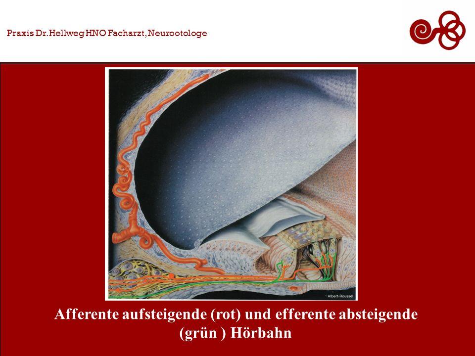 Afferente aufsteigende (rot) und efferente absteigende (grün ) Hörbahn