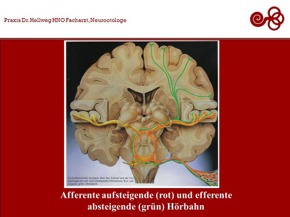 Afferente aufsteigende (rot) und efferente absteigende (grün) Hörbahn