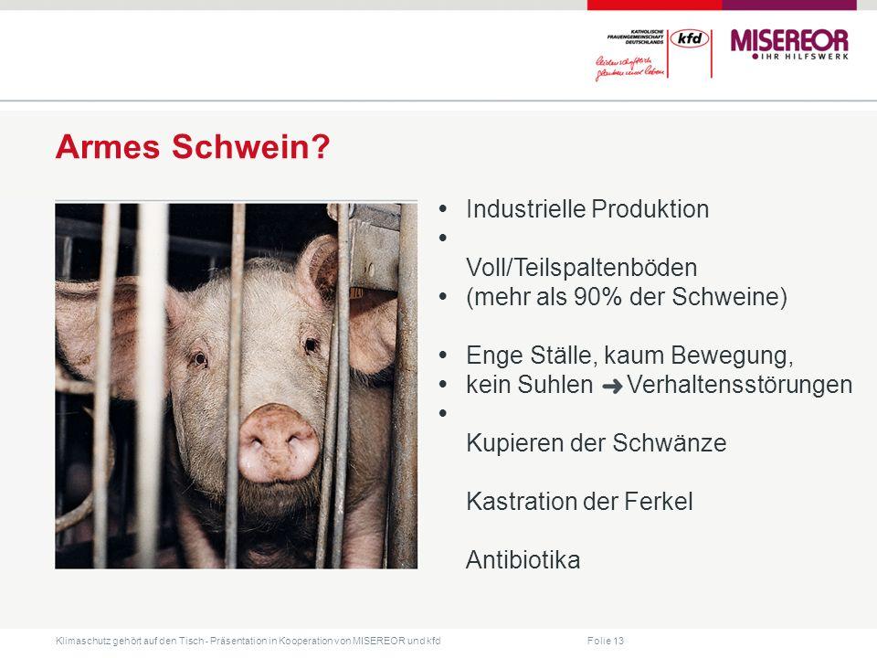 Armes Schwein • Industrielle Produktion