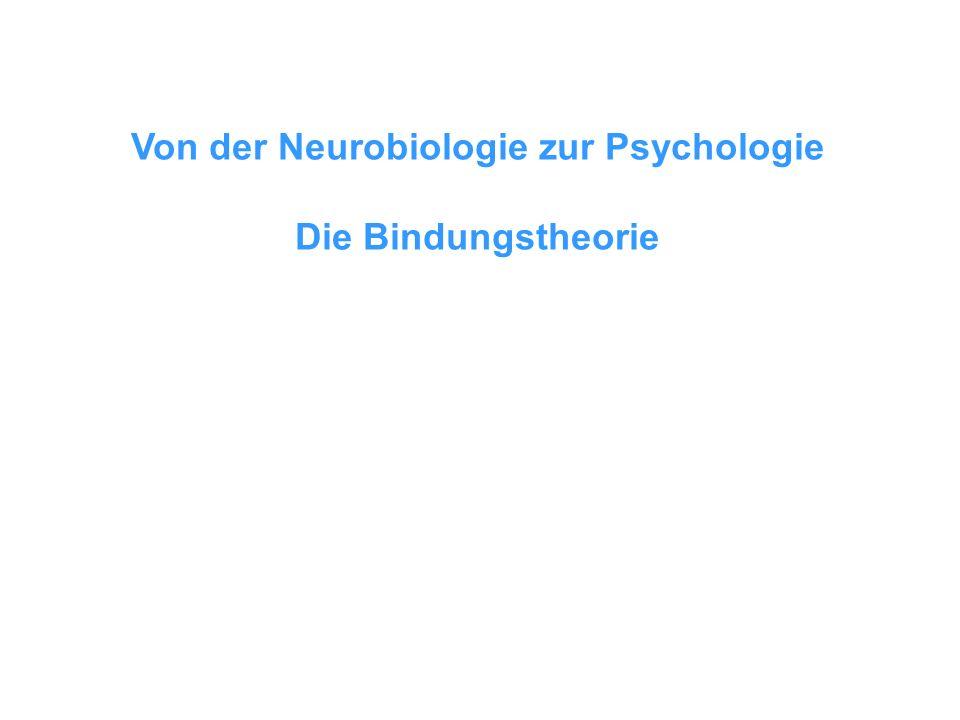 Von der Neurobiologie zur Psychologie