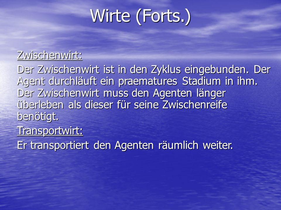 Wirte (Forts.) Zwischenwirt: