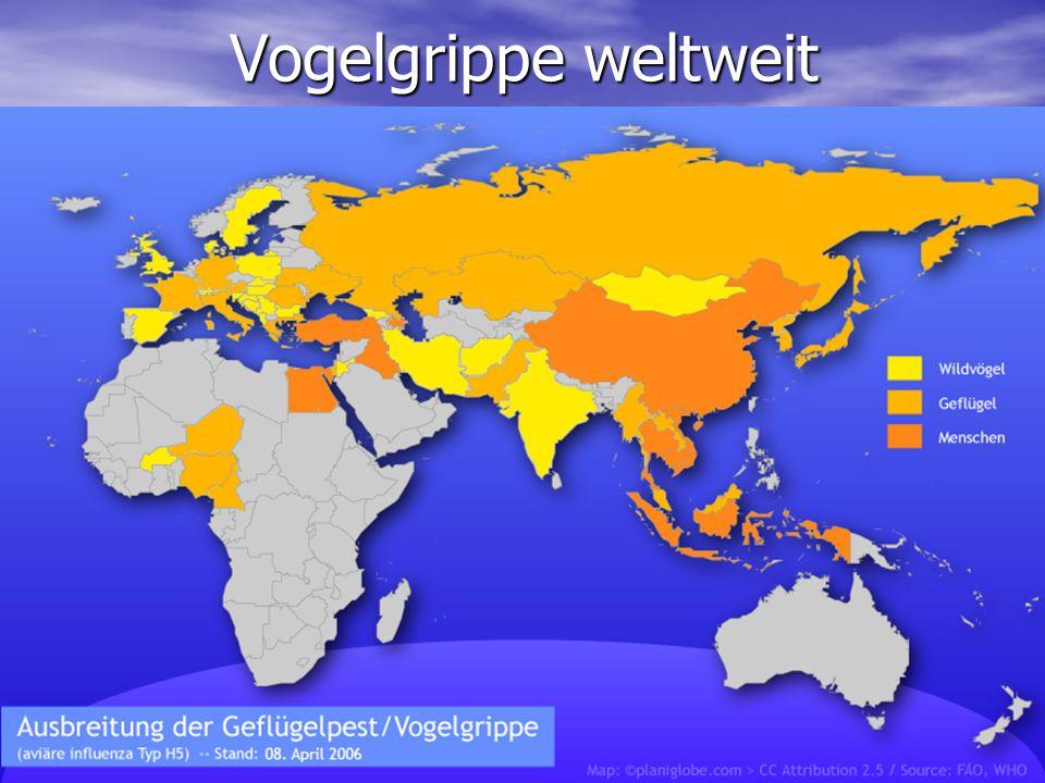 Vogelgrippe weltweit