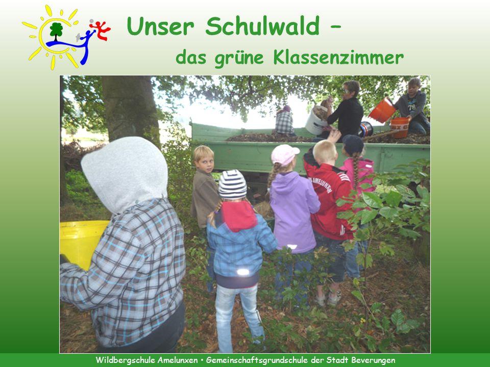 Unser Schulwald – das grüne Klassenzimmer