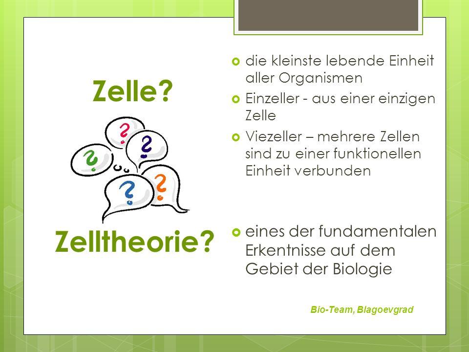 Zelle die kleinste lebende Einheit aller Organismen. Einzeller - aus einer einzigen Zelle.