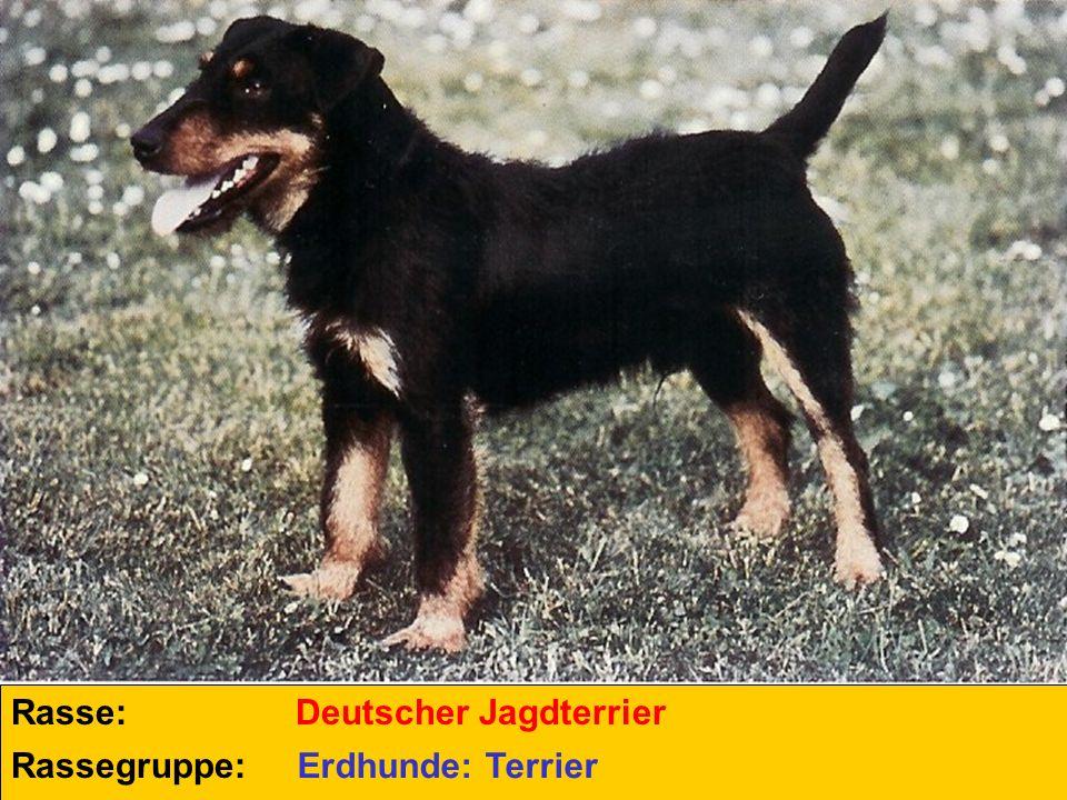 Rasse: Deutscher Jagdterrier Rassegruppe: Erdhunde: Terrier