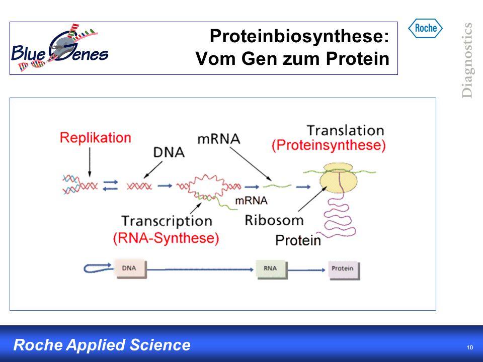Proteinbiosynthese: Vom Gen zum Protein