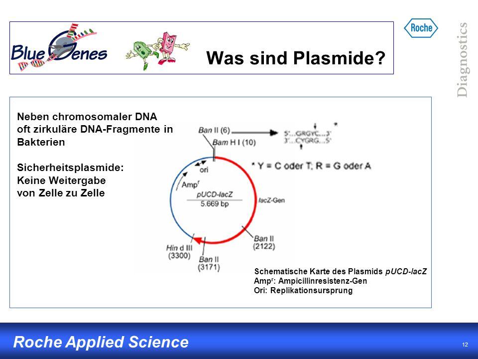 Was sind Plasmide Neben chromosomaler DNA