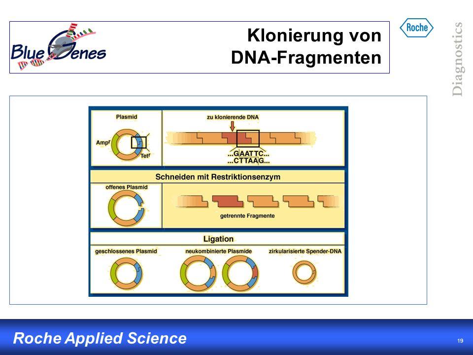 Klonierung von DNA-Fragmenten