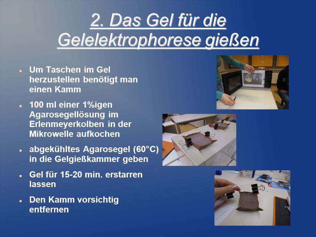 2. Das Gel für die Gelelektrophorese gießen