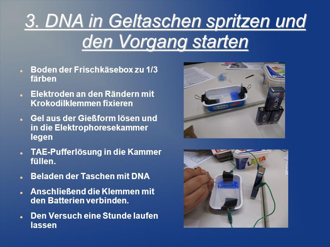 3. DNA in Geltaschen spritzen und den Vorgang starten