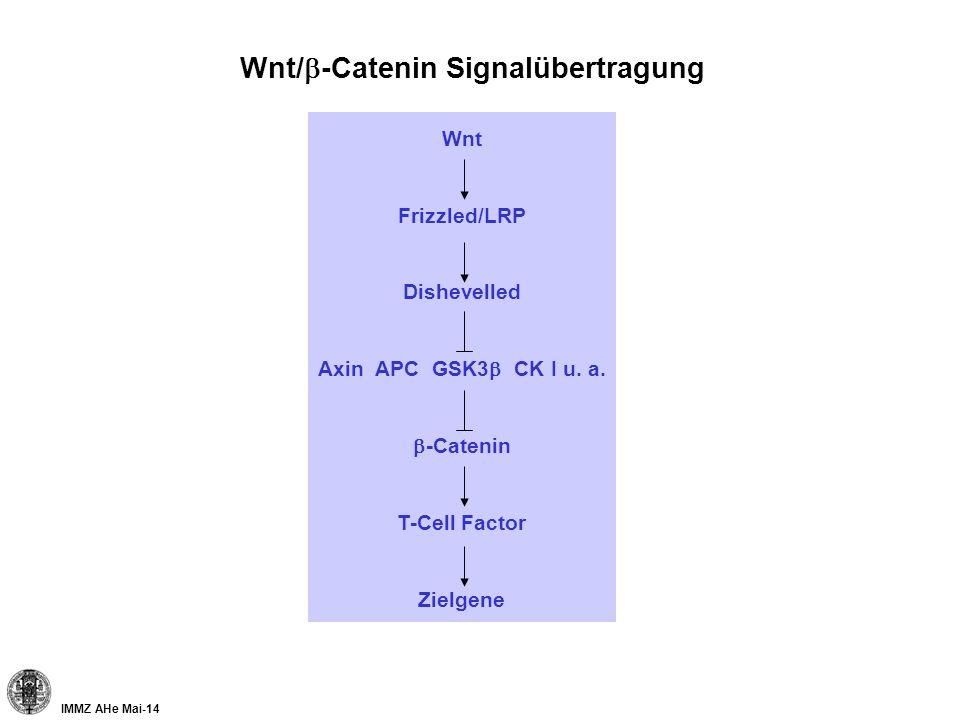 Wnt/b-Catenin Signalübertragung