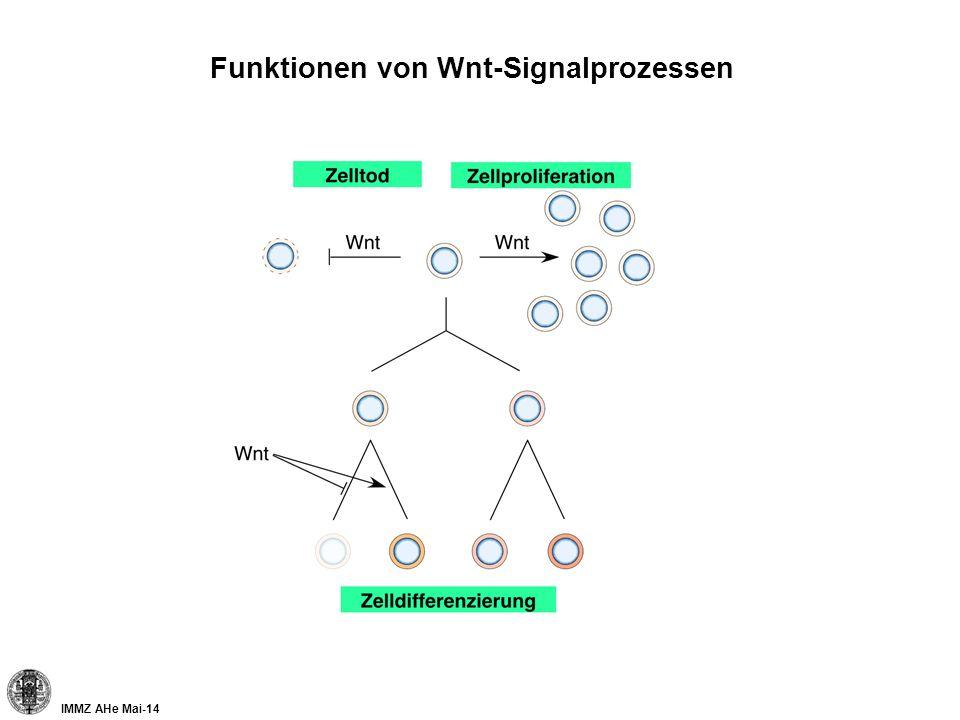 Funktionen von Wnt-Signalprozessen