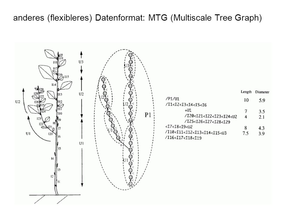 anderes (flexibleres) Datenformat: MTG (Multiscale Tree Graph)