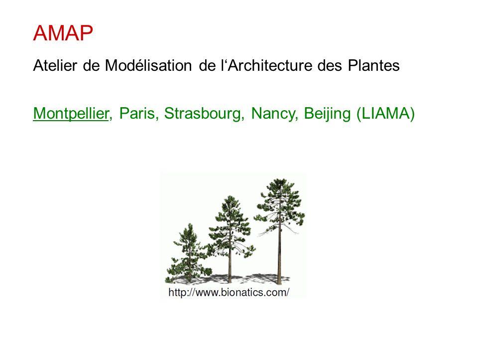 AMAP Atelier de Modélisation de l'Architecture des Plantes
