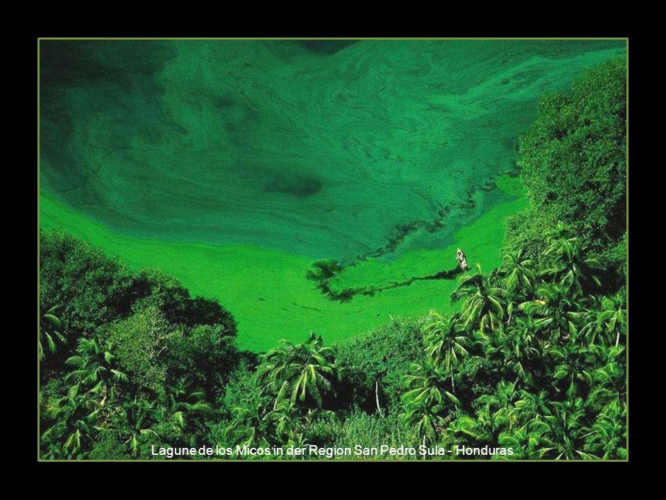 Lagune de los Micos in der Region San Pedro Sula - Honduras