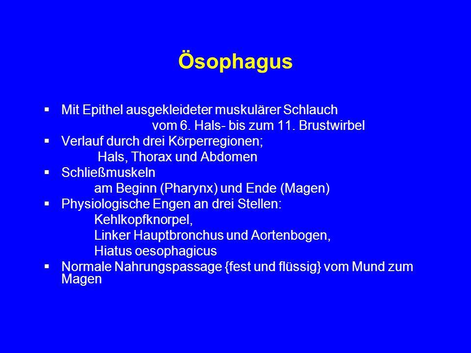 Ösophagus Mit Epithel ausgekleideter muskulärer Schlauch