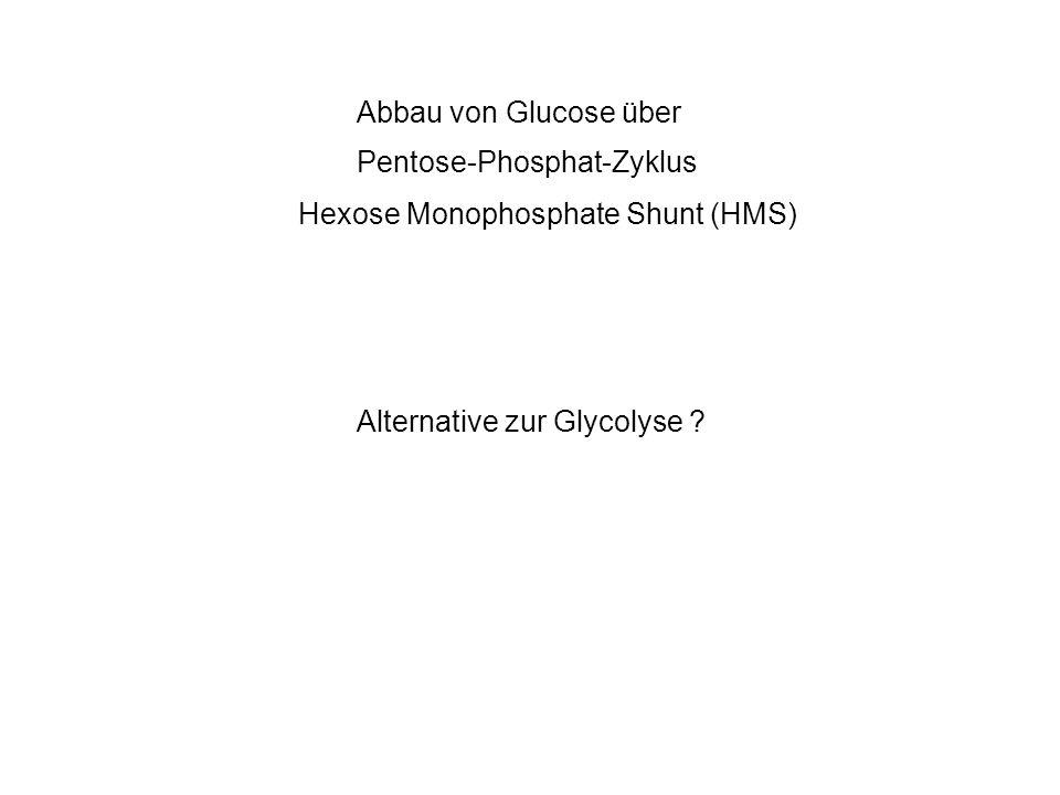 Pentose-Phosphat-Zyklus