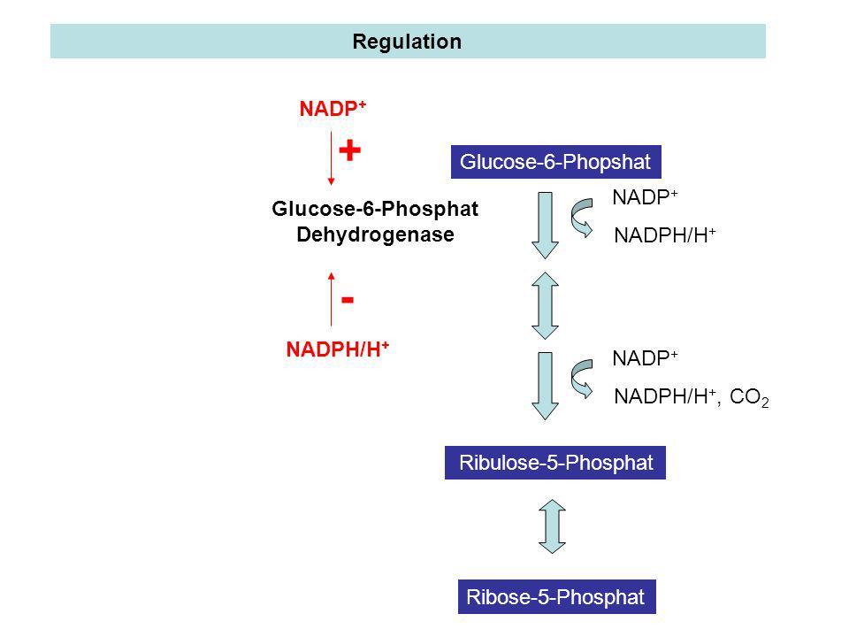 Glucose-6-Phosphat Dehydrogenase