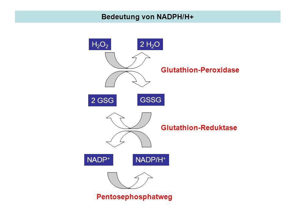 Bedeutung von NADPH/H+