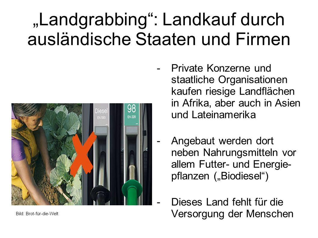 """""""Landgrabbing : Landkauf durch ausländische Staaten und Firmen"""