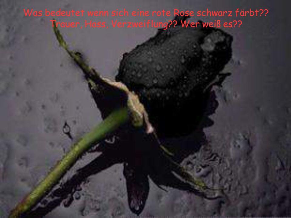 Was bedeutet wenn sich eine rote Rose schwarz färbt