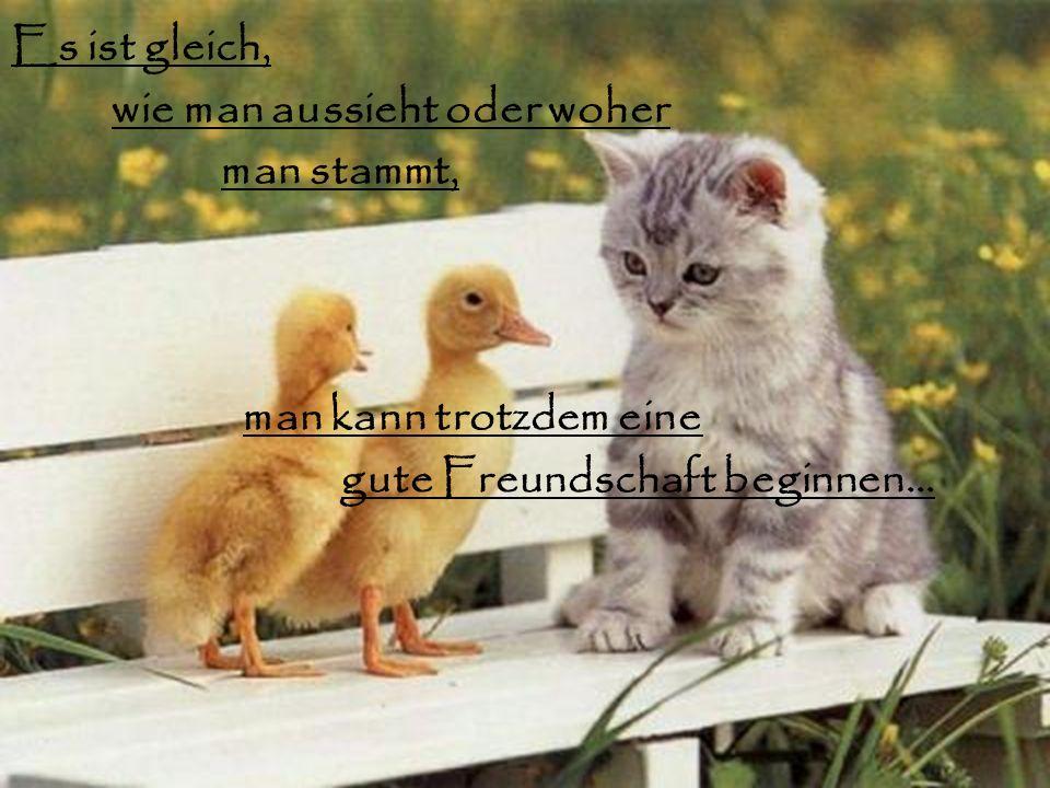 gute Freundschaft beginnen…