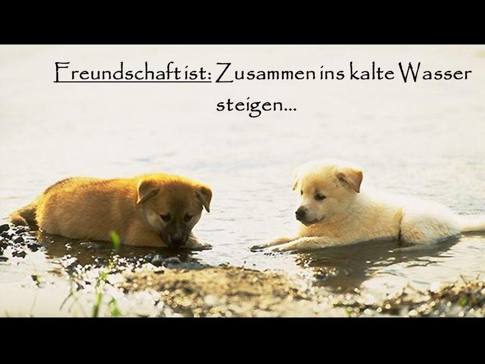 Freundschaft ist: Zusammen ins kalte Wasser
