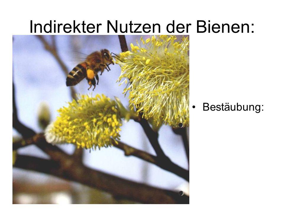 Indirekter Nutzen der Bienen: