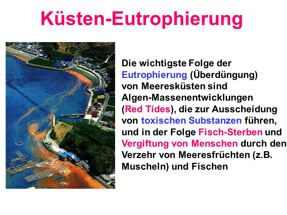 Küsten-Eutrophierung