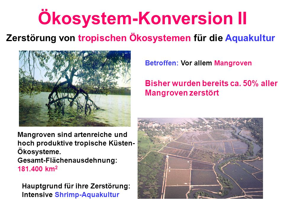 Ökosystem-Konversion II