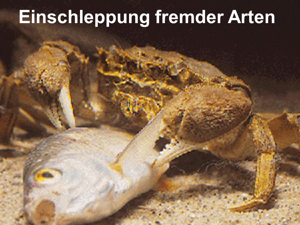 Einschleppung fremder Arten