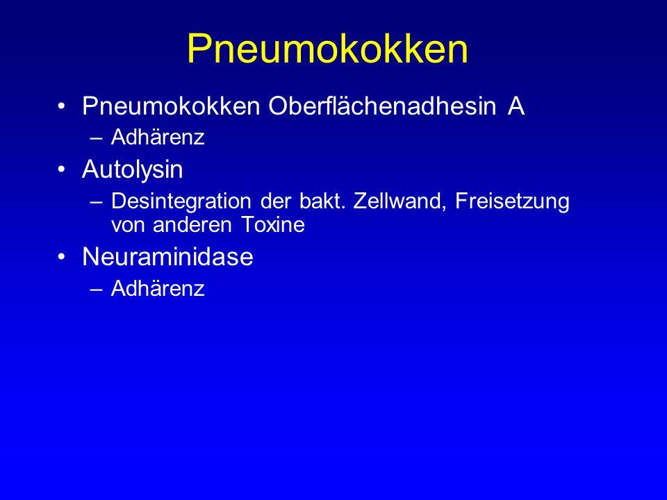 Pneumokokken Pneumokokken Oberflächenadhesin A Autolysin Neuraminidase