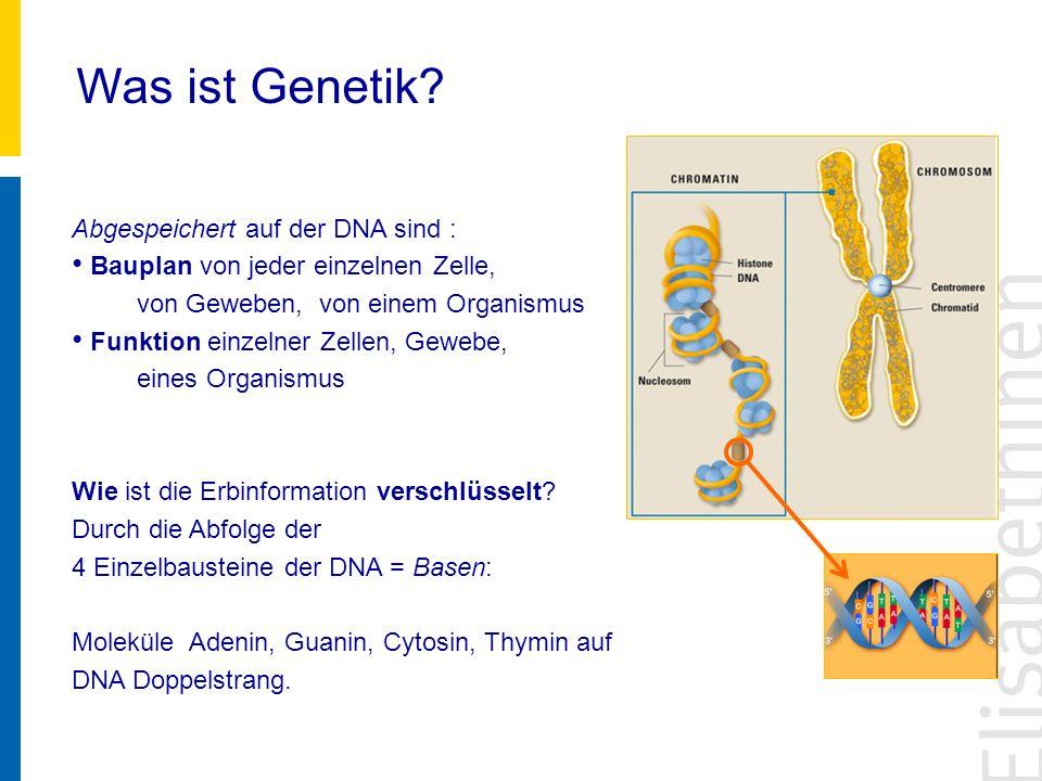 Was ist Genetik Abgespeichert auf der DNA sind :