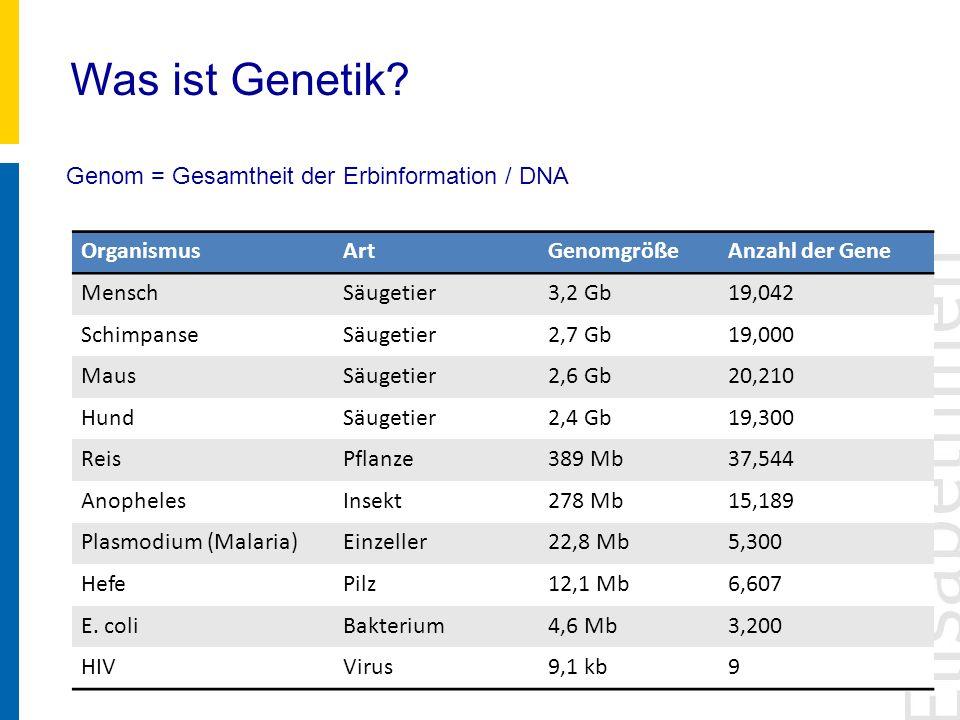 Was ist Genetik Genom = Gesamtheit der Erbinformation / DNA