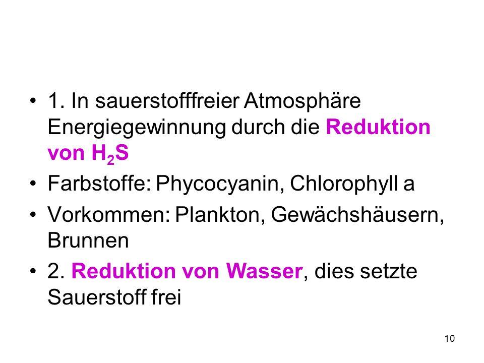 1. In sauerstofffreier Atmosphäre Energiegewinnung durch die Reduktion von H2S