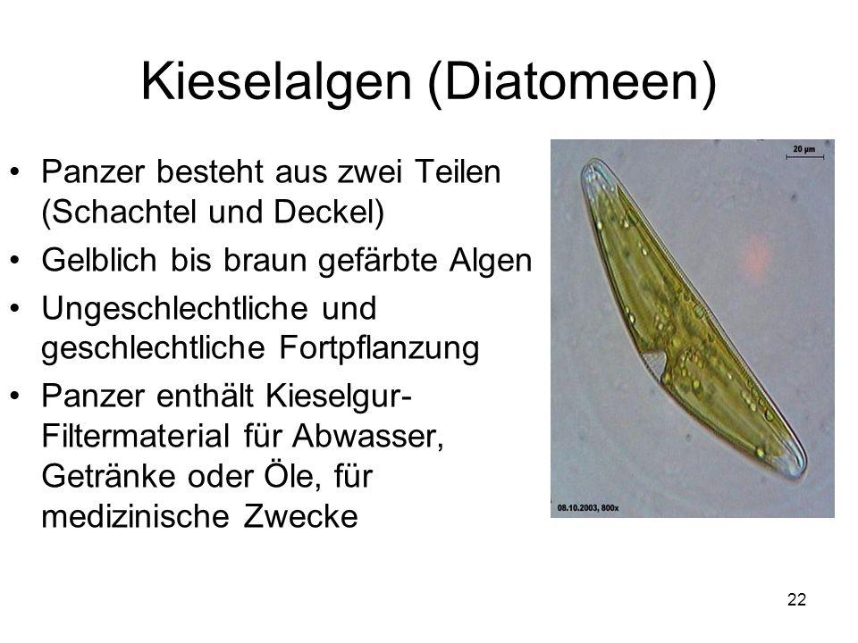 Kieselalgen (Diatomeen)