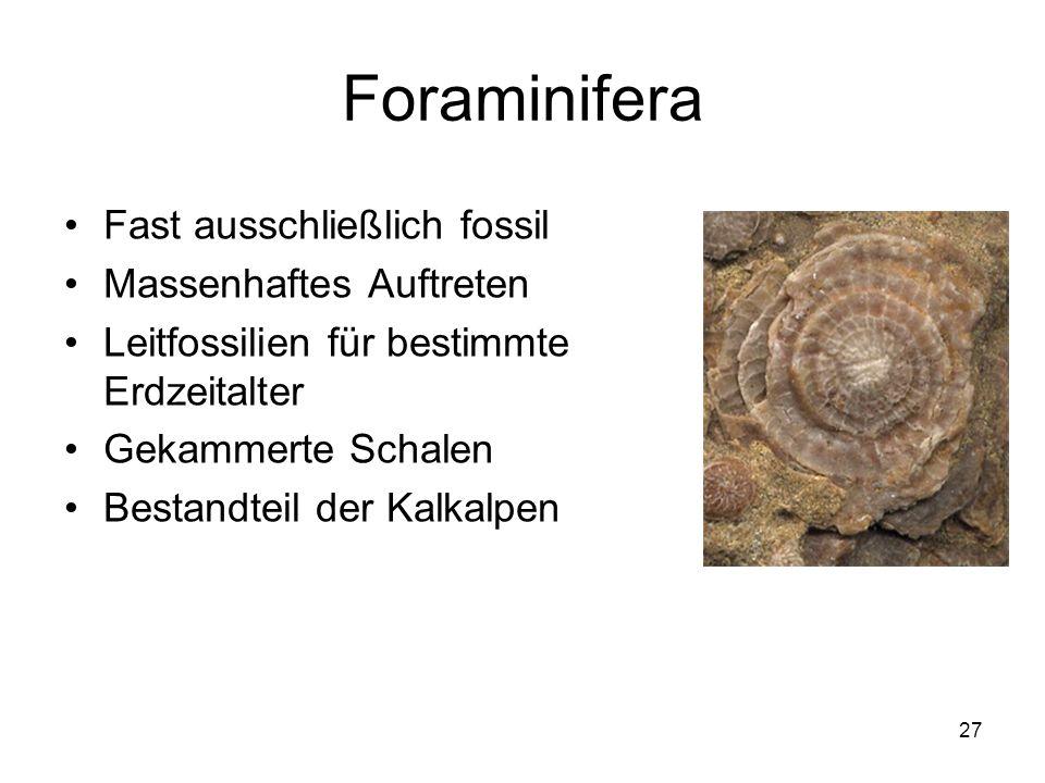 Foraminifera Fast ausschließlich fossil Massenhaftes Auftreten