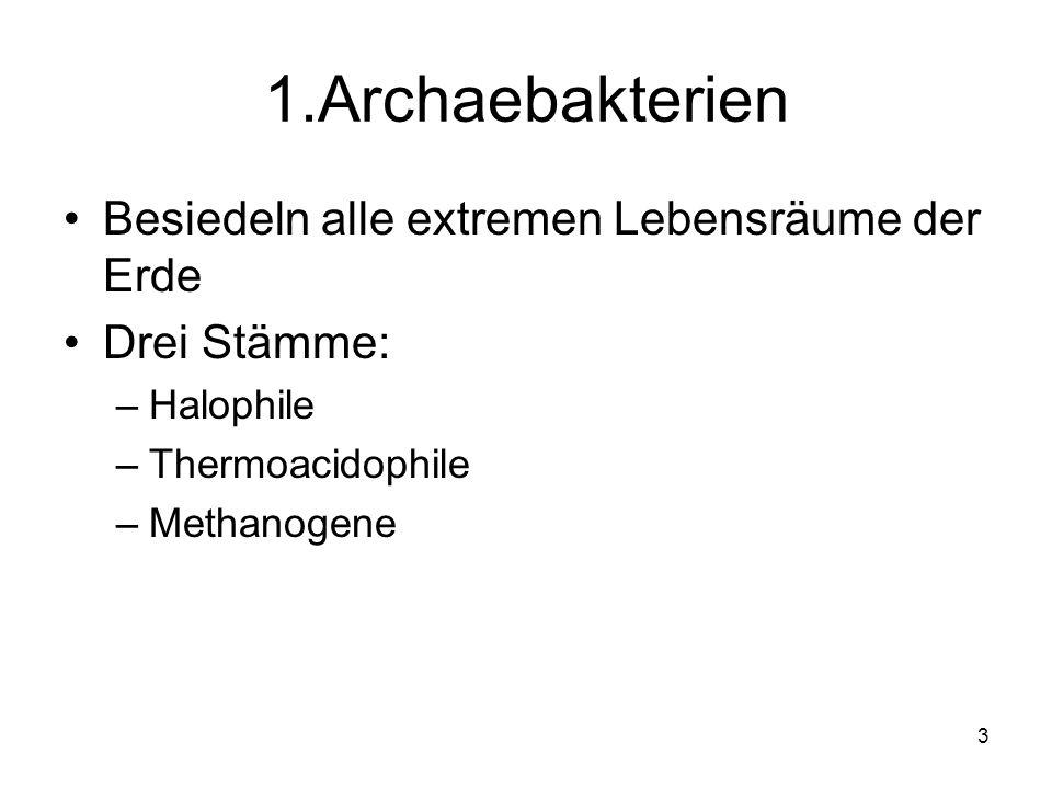 1.Archaebakterien Besiedeln alle extremen Lebensräume der Erde