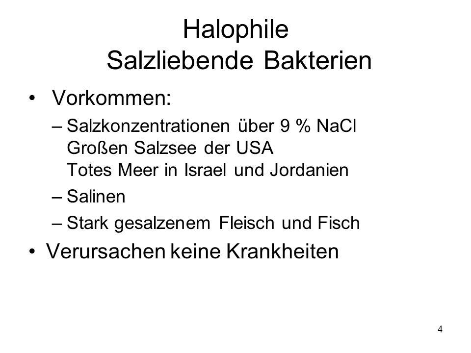 Halophile Salzliebende Bakterien